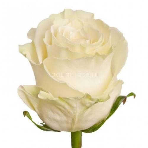 Доставки цветов подарки из цветы купить спб дешево цветов пенза московская