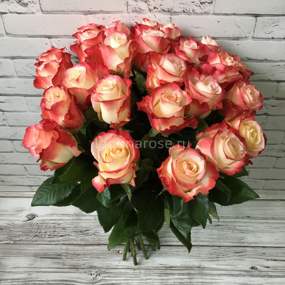 Букет, букет из двухцветных роз